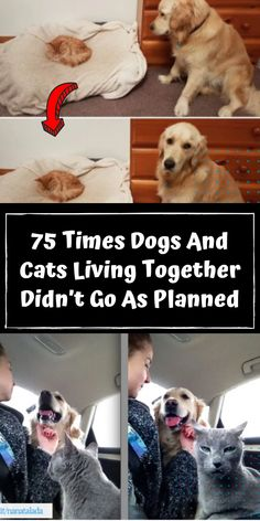 They'll get used to the new scents without feeling crowded or threatened. Then get ready for the inevitable hilarity of living with a cat and dog. #awesome #amazing #facts #funny #humor #interesting #trending #viral #news #entertainment #memes #facts Animals And Pets, Cute Animals, Funny Dogs, Funny Humor, Best T Shirt Designs, Girl Photography Poses, Whippet, Nature Wallpaper, Weird Facts