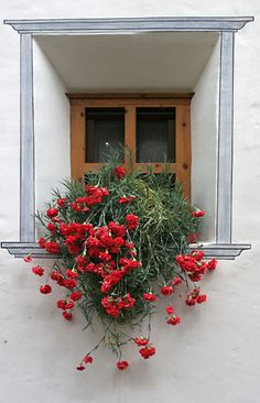 Little window with red carnation, Engadin, Switzerland