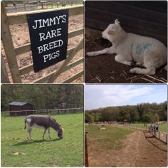 Visiting Jimmys Farm - An Essex Wife