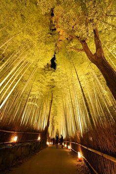 Hanatouro in Kyoto
