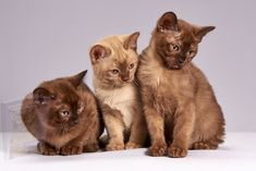 Cute Kittens, Kitten Images, Kitten Photos, Gatos Cat, Animal Rescue Center, Video Chat, Three Cats, Cat Accessories, Cat Behavior