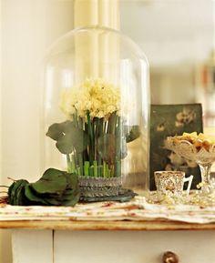 Under glass: Bouquet de narcisses jaunes piquées dans de la mousse végétale sous une cloche en verre