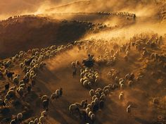 Shepherds tend to their flock of sheep on a dusty road in Turkey in this National Geographic Photo of the Day.