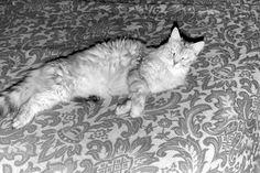 Kitty Cat... KC for short... taking a little rest