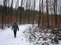 Image result for winter walk in woods