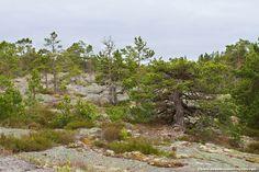 The autonomous islands of Aland surprise with their versatility and breathtakingly  beautiful nature.  #travelphotography #nature #Åland #Aland #visitåland #visitFinland #exploreFinland #archipelago #visitArchipelago #wanderlust #mindfulness #travelblog