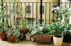 Gemüse auf dem Balkon-anpflanzen Sorten-Tipps Lage