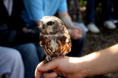 look at the little wee owl... come home with me please!!