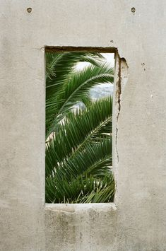 I find this image thought-provoking, due too the contrast of the stark cement wall and the beautiful palm trees behind it.