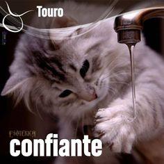"""""""#Touro #signos #zodíaco ♉"""""""