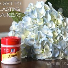 The Secret to Long-Lasting Hydrangeas--add alum to the stem immediately after cutting and arrange in vase of water.