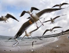 Photos of the day  December 27 2016Sea gulls fly at the beach...  Photos of the day  December 27 2016  Sea gulls fly at the beach of the Baltic Sea in Timmendorfer Strand Germany; a Bangladeshi girl plays on a swing in Dhaka Bangladesh; Swedens Maria Pietilae Holmner falls during the second run of an alpine ski womens World Cup Giant Slalom in Semmering Austria; Flowers are reflected in a portrait of an ensemble member as they lay in front of the Alexandrov Ensemble building in Moscow…