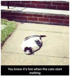 Funny animal pictures of the day - 24 pictures - cats - . Funny animal pictures of the day – 24 pictures – cats – … – animals – - Funny Animal Jokes, Funny Cat Memes, Cute Funny Animals, Funny Animal Pictures, Cute Baby Animals, Pet Memes, Funny Humor, Hilarious Pictures, Funny Videos