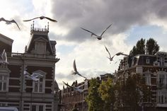 Amsterdam birds.