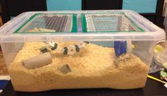 DIY bin cage. Home made hamster cage from a storage tub. These can be made from any size tub and are so simple to make. A great way to give your hamster more space for less money!!