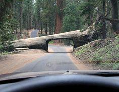 Tree tunnel in California