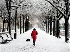 A woman walks her dog along a snowy street in Stockholm, Sweden. Jessica Gow, AFP/Getty Images