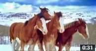 Budweiser Clydesdale Horses Snowball Fight https://www.youtube.com/watch?v=_m7iKHUWq8M