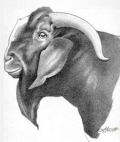 Cabras Boer, Boer Goats, Showing Livestock, Cowboy Art, Pencil Drawings, Moose Art, Logo, Tattoos, Crafts