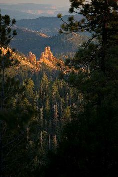 Evening light of Bryce Canyon National Park in Utah