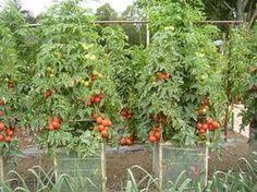 Pomôžu vám k tomu lacné klimatizačné bunky Edible Garden, Garden Plants, Flora, Pergola, Outdoor Structures, Gardening, Garden Ideas, Apollo, Farms