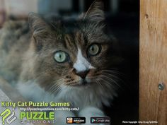 Kitty Cat Puzzle Games