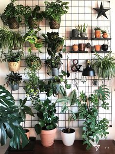 Room With Plants, House Plants Decor, Plant Decor, Wall Of Plants, Indoor Garden, Indoor Plants, Plant Aesthetic, Bedroom Plants, Plant Shelves