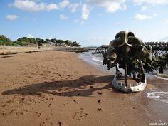 Saints, Photos, Ocean, Kite, Brittany, The Ocean, Sea, Cake Smash Pictures