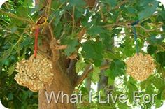 birdfeeder: cardboard cut out and hole punched, smear peanut butter, sprinkle on bird seed and hang!