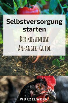Selbstversorgung starten: Der kostenlose Guide für Anfänger – Dein Start ins Selbstversorger-Leben mit Tipps rund um Haus, Garten, Balkon und Tiere. #Selbstversorger #Selbstversorgung