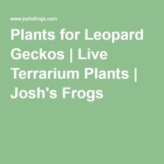 Plants for Leopard Geckos | Live Terrarium Plants | Josh's Frogs