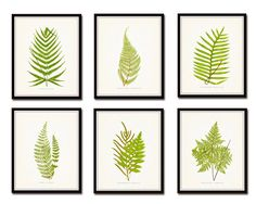 Vintage Ferns Print Set No. 1 Botanical Print by BelleMaisonArt