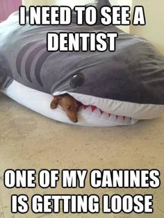 Need to see a dentist.  One of my canines is getting loose.