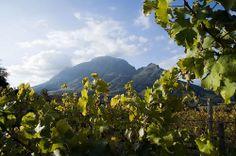 Clouds Wine Estate, Stellenbosch