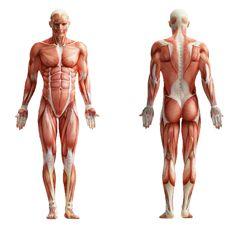 50 ćwiczeń z masą ciała, które może wykonać wszędzie - FitNow - Porady. Ćwiczenia. Video.
