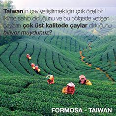Taiwan'ın Formosa bölgesinde dünyanın en kaliteli çaylarının yetiştirildiğini biliyor muydunuz?