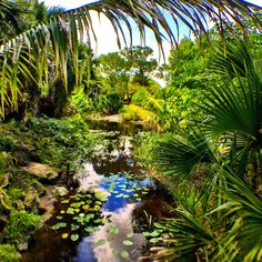 Mounts Botanical Garden in West Palm Beach, Florida. Adriana Abarca, Your Take