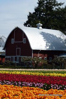 Beautiful farm Living....have a big ole barn...raise flowers for guests (:       Not quite this many Lol