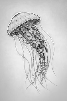 Fhöbik - Jellyfish by Fhöbik Artwork, via Behance If I ever got a tattoo of an animal it would definitely be a jellyfish Jellyfish Drawing, Jellyfish Painting, Jellyfish Tattoo, Watercolor Jellyfish, Jellyfish Quotes, Jellyfish Aquarium, Tattoo Watercolor, Blue Jellyfish, Aquarium Fish