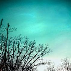 Teal sky Photography print of tree agaisnt a lovely by Yashvir, $15.00