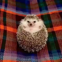 Tag someone who you know would smile from this Hedgehog Video. Get everyday video by Follow us