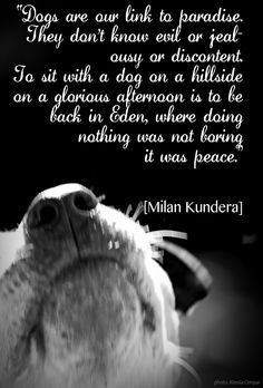 Dogs' unconditional love