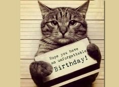 Funny cat memes cat birthday meme Funny animals memes that make you laugh out loud Cat Birthday Memes, Cat Birthday Wishes, Happy Birthday Messages, Animal Birthday, Happy Birthday Funny Humorous, Happy Birthday Animals Funny, Funny Birthday, Free Ecards Birthday, Birthday Cats