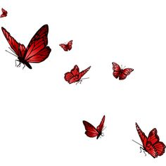 Butterflies ❤ liked on Polyvore featuring butterflies, animals, fillers, red, backgrounds and effects