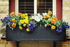 Dekoration Blumenkasten Lovely Window Design Ideas With Plants That Make Your Home Cozy 30 Window Box Plants, Fall Window Boxes, Window Box Flowers, Flower Boxes, Window Sill, Flower Ideas, Open Window, Shade Loving Flowers, All Flowers