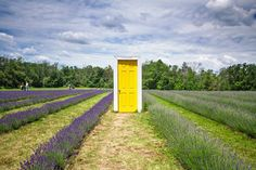 This unreal lavender farm is just one hour from Toronto