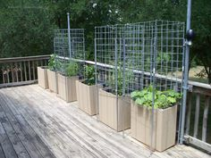 vegetable gardening in containers   Starting a Container Vegetable Garden   Deck Container Garden