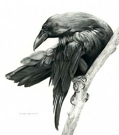Were in a dell. - Raven Tattoo tattoo-ideas