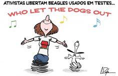 Beagles libertados