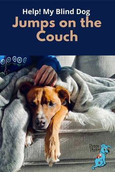 Blind Dog Jumps On Couch : blind, jumps, couch, Behavior, Ideas, Behavior,, Training,